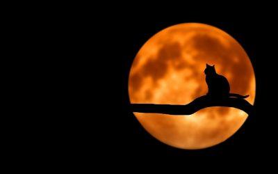Le cycle de la lune : comment l'utiliser pour t'épanouir